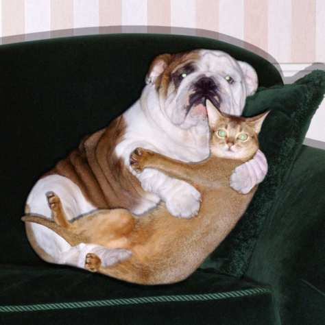 19-dog-cat-hug-w529-h529-2x
